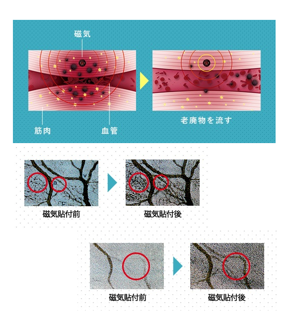 磁気による血行改善の図